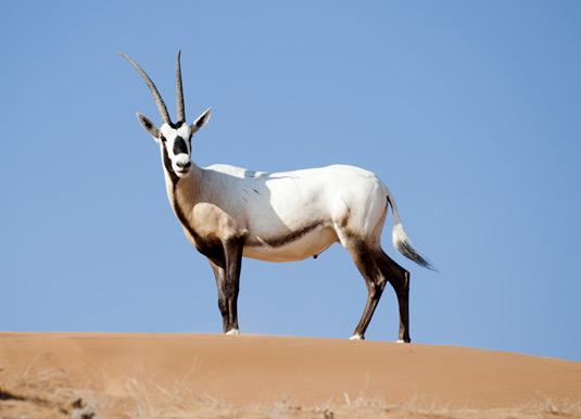 Desert-wildlife.jpg