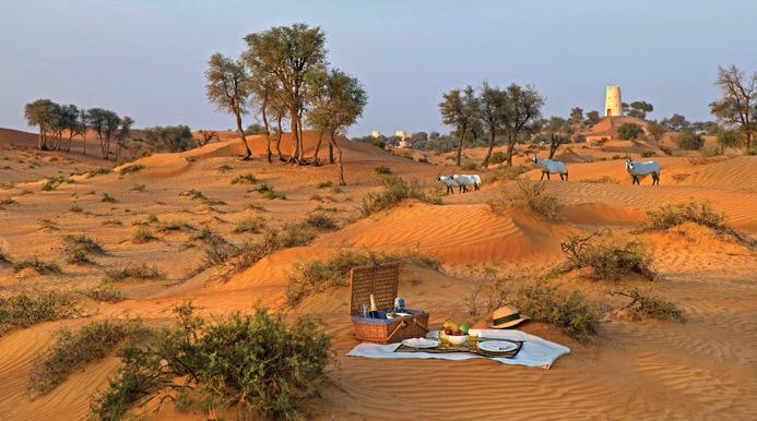 Desert Experiences