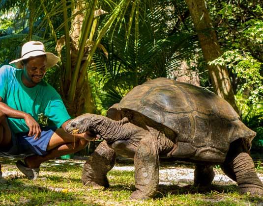 Denis_Island_-_Giant_Tortoise.jpg