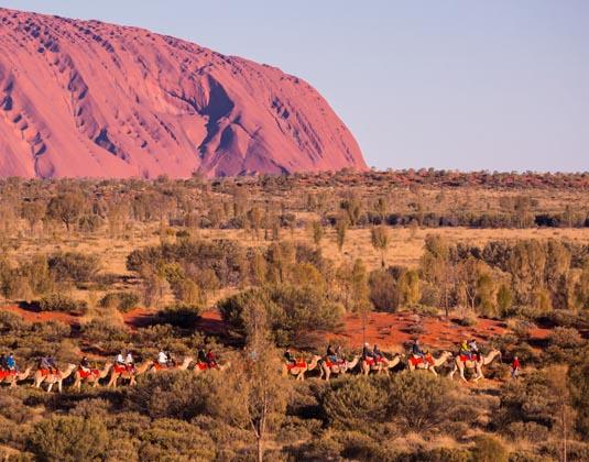 Uluru_camels.jpg