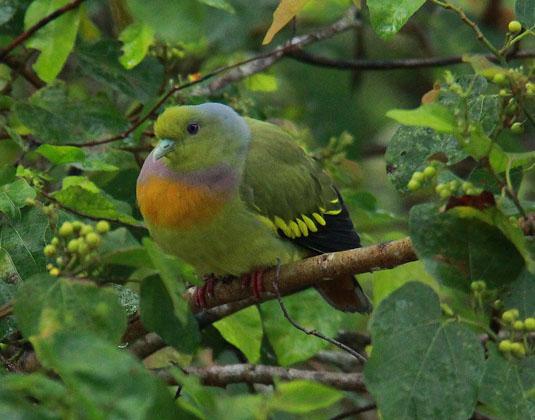 Udawalawe bird
