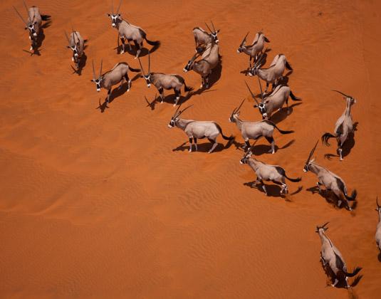 Oryx_Namibia.jpg