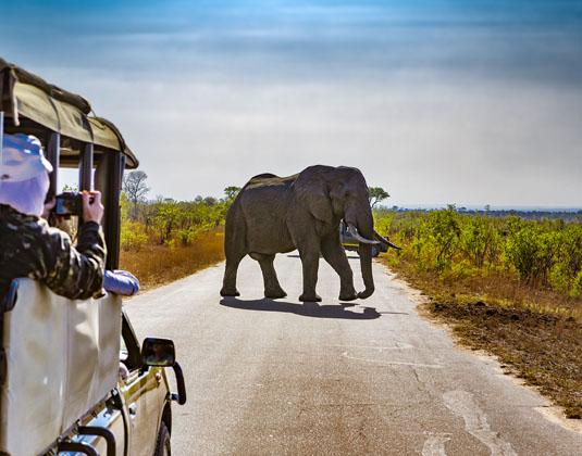 Kruger_safari_jeep_and_elephant.jpg