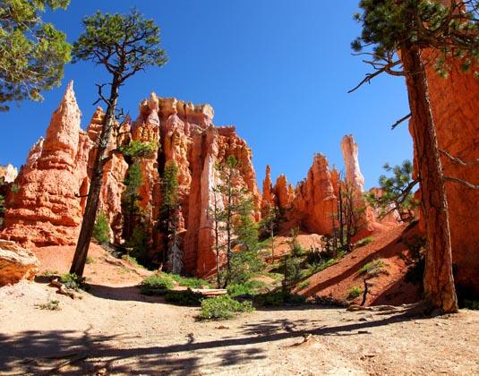 Hoodoos_and_Ponderosa_Pines_of_Bryce_Canyon.jpg