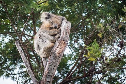 Featherdale_Wildlife_Reserve_shutterstock_389583514.jpg