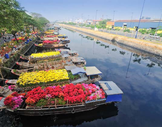 Ho Chi Minh flowers
