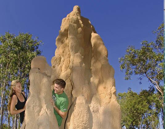 Termite_Mounds_Litchfield_National_Park.jpg