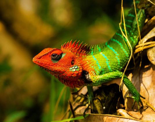 Sinharaja Rainforest  Holidays