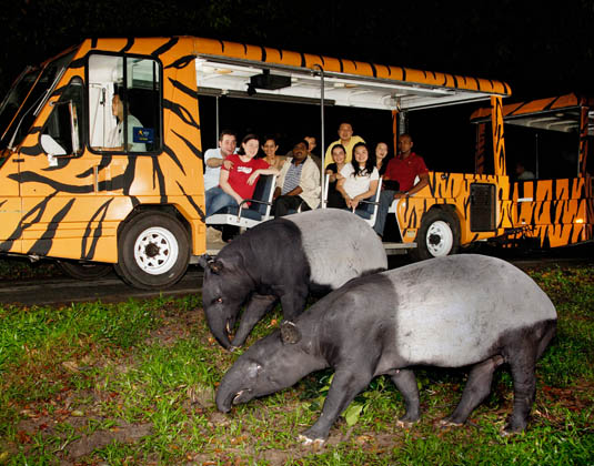 Night safari excursion