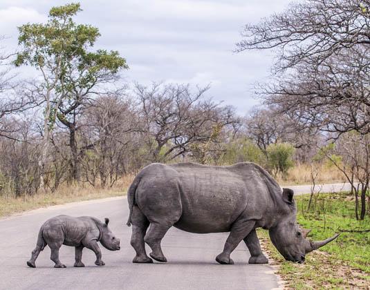 Rhino_Kruger-Park.jpg