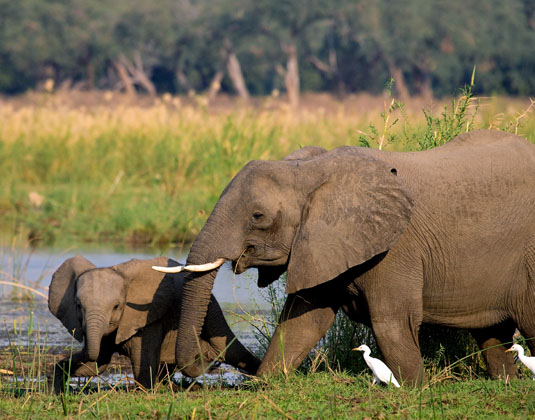 Victoria Falls River Safari excursion