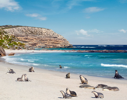 Southern_Australia_Explorer_and_Kangaroo_Island_Seal_Bay_Conservation_Park,.jpg