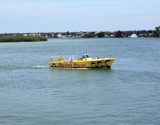 Speedboat Dolphin Adventure