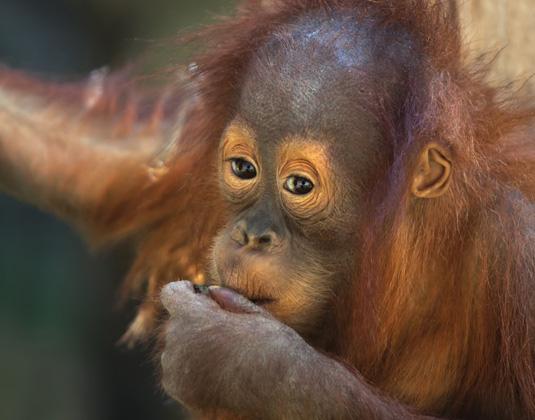 Singapore & Borneo Holidays