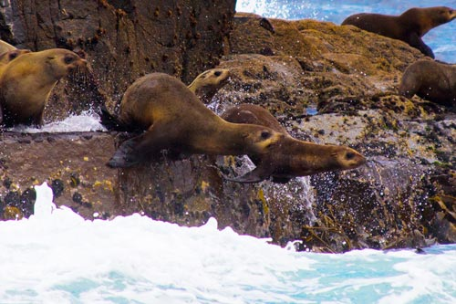 BRUNY_ISLAND_SEALS.jpg