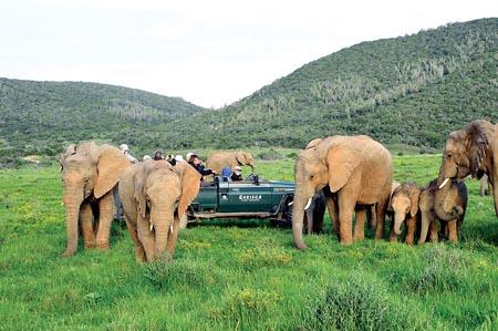 Kariega_elephants_vehicle.jpg