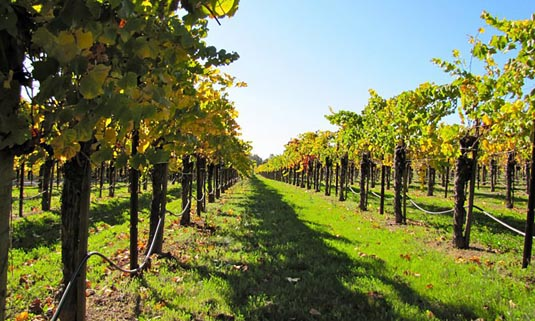 California Wine Country excursion