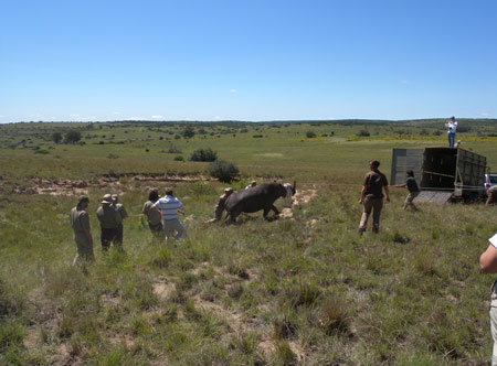 Amakhala-Volunteers-presented-by-Safari-Lodge_3.jpg
