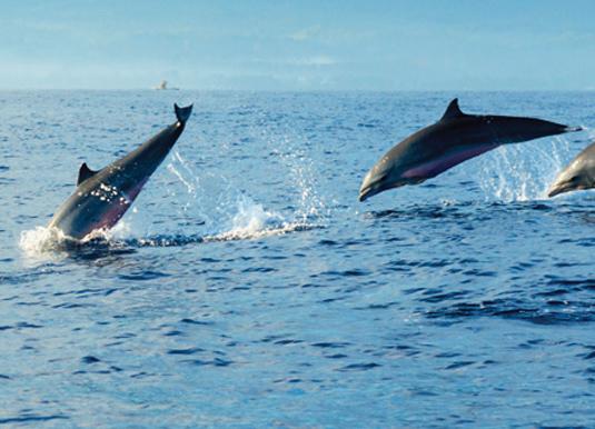 Swamp & Dolphin Cruise Sarawak