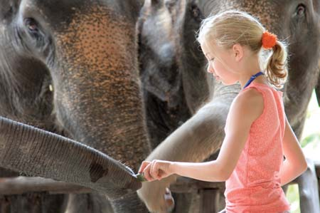 Feeding-the-elephants.jpg