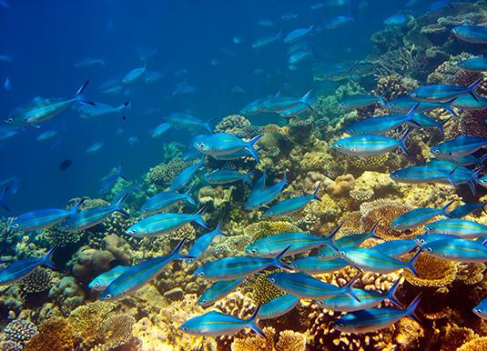 Mauritius6.jpg