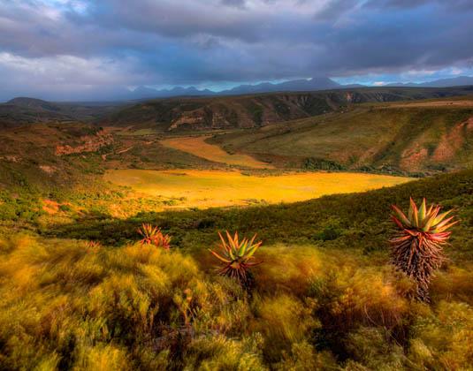 Gondwana_-_Nauga_Valley.jpg