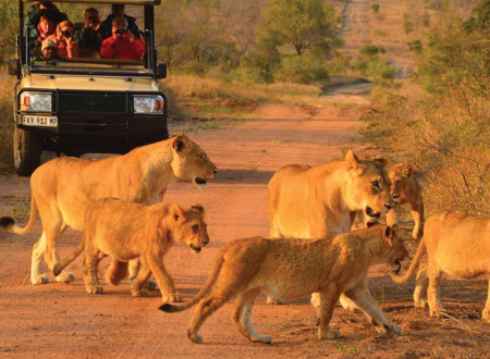 Hoyo_Hoyo_Safari_Lodge_Talamati_Lion_Pride.jpg
