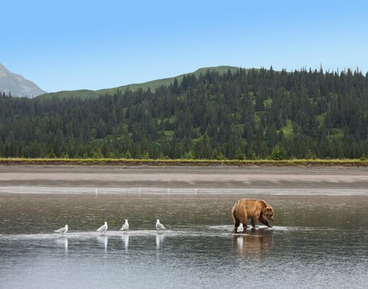 Bear_on_Lake.jpg
