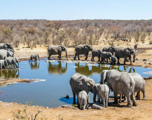 Etosha Safari Holidays