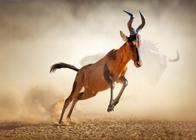 Safari Holidays & Wildlife
