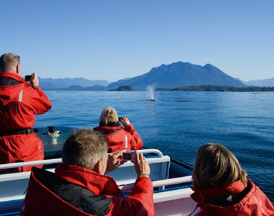 Tofino Whale Watching Cruise excursion