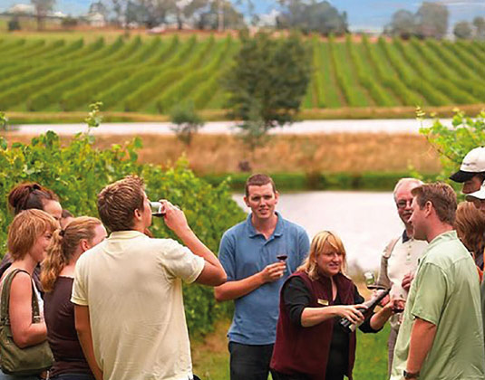 Yarra Valley Wine Experience (including lunch) excursion