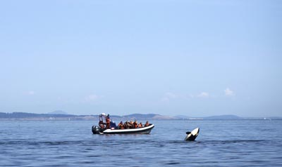 Victoria Whale Watching excursion