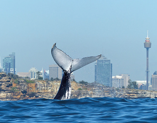 4 Hour Whale Watching Cruise excursion