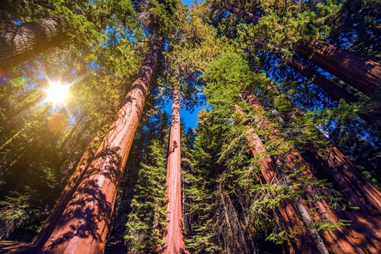 Redwoods & Wine Country Escape excursion