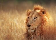 Safari Holidays & Wildlife