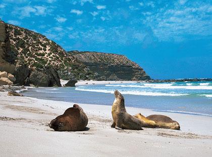 Kangaroo_Island_Coast_to_Coast.jpg