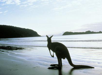 Kangaroo_Island.jpg
