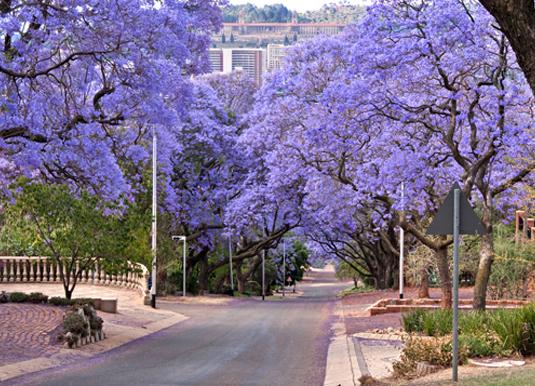Pretoria_shutterstock_63478216.jpg