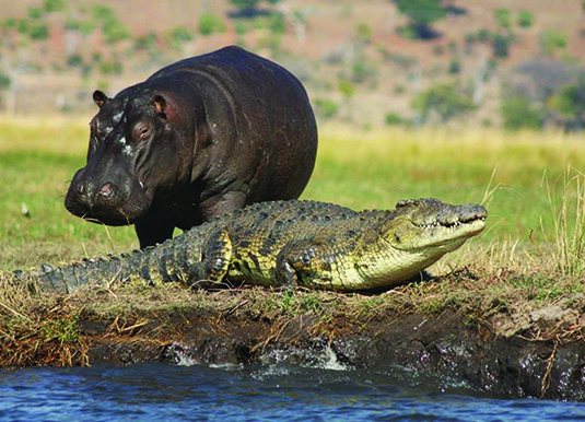 Chobe_River_Wildlife_2.jpg