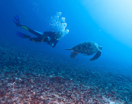 Swimming green turtle (Chelonia mydas) and diver, Gili meno, Lombok, Indonesia