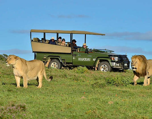 Shamwari_Private_Game_Reserve_-_Game_Drive.jpg