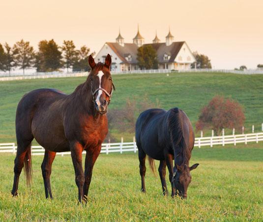 Rest_of_Southern_Rural_Kentucky.jpg