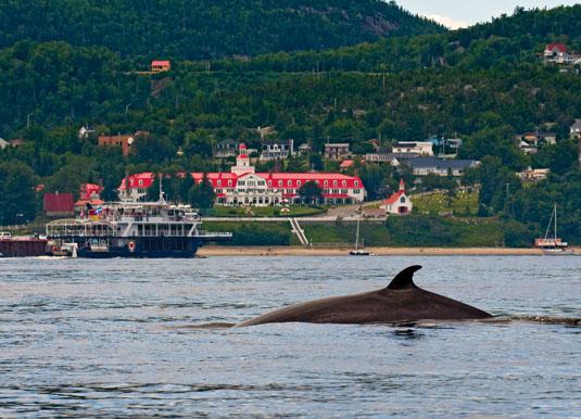 Quebec_-_Tadoussac_Bay,_Whale.jpg