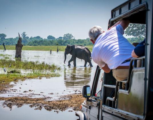 Uda Walawe National Park Photographing elephant