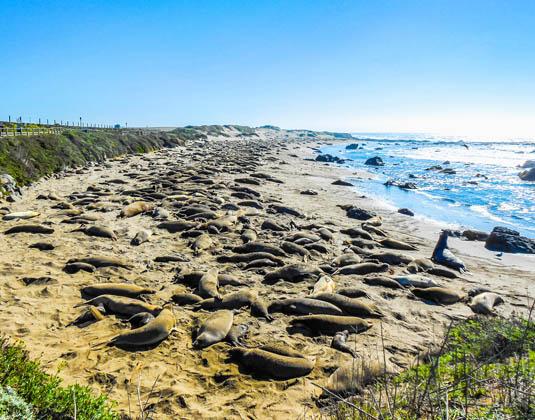 Piedra_Blancas_beach_in_Big_Sur_PCH.jpg