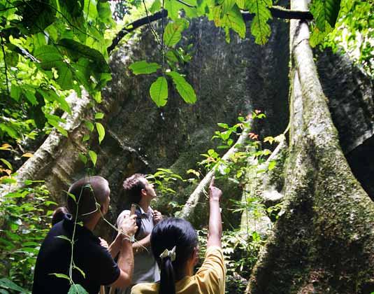 Elephant_Hills_-_Jungle_Trekking.jpg