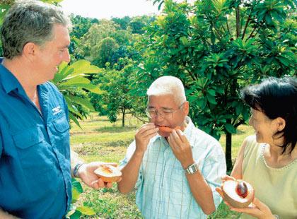 Atherton Tablelands Food, Wine & Rainforest excursion