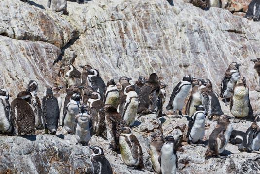 Penguin Patrol Tour excursion