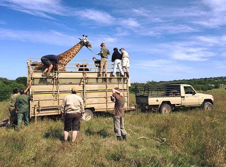 Amakhala-Volunteers-presented-by-Safari-Lodge_5.jpg